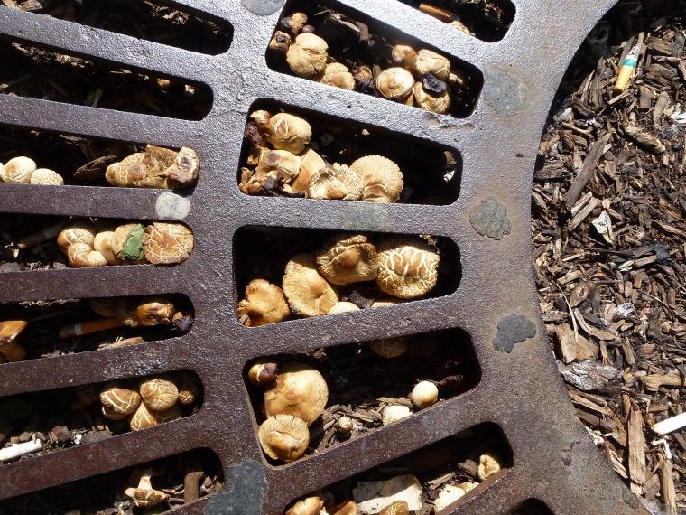 Everyday Photo: Mushrooms by Laura Bolesta