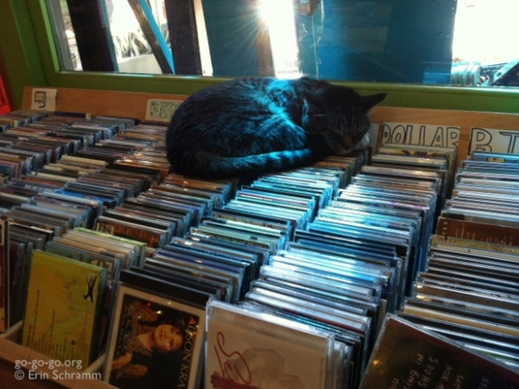 Everyday Photo: Record Store Kitty  © Erin Schramm