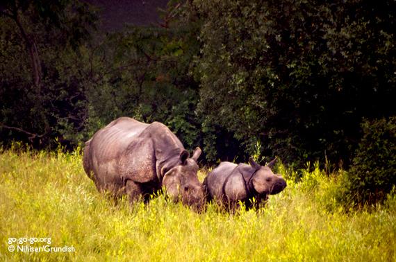 4-Rhinos