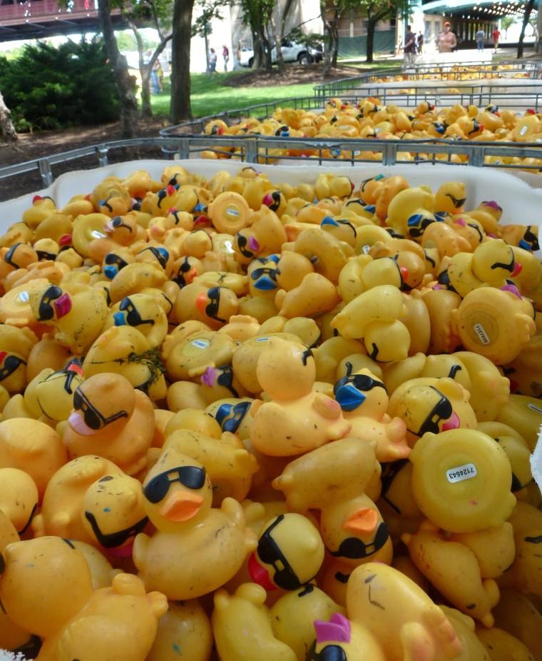 Everyday Photo: Duck Bin